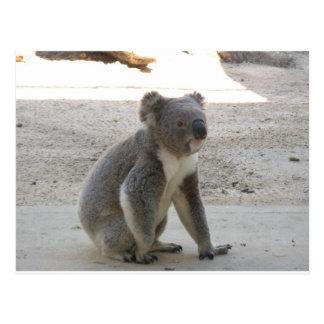 Postal Koala linda