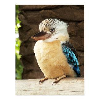 Postal Kookaburra