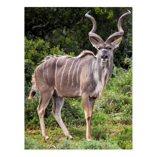 Postal Kudu.