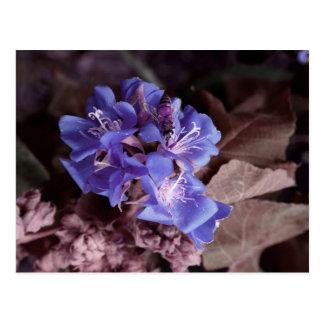 Postal la abeja en flores azules colorized púrpura
