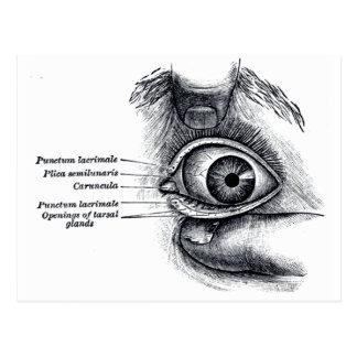 Postal La anatomía del gris - globo del ojo