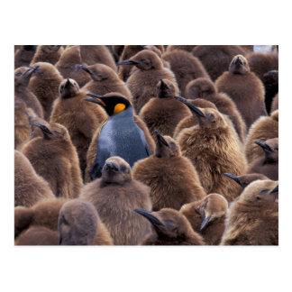 Postal La Antártida, isla del sur de Georgia, pingüinos