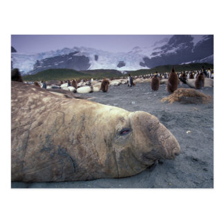 Postal La Antártida, isla del sur de Georgia, sello de