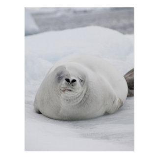 Postal La Antártida, península antártica, antártica
