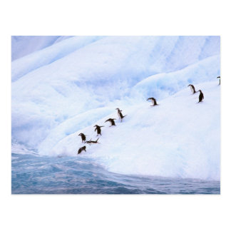 Postal La Antártida, península antártica. Chinstrap