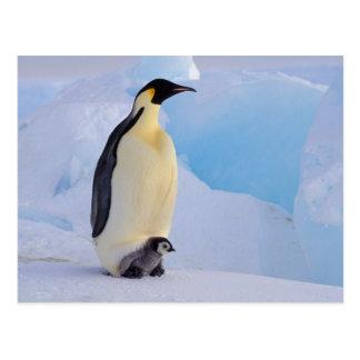 Postal La Antártida, pingüino de emperador (Aptenodytes