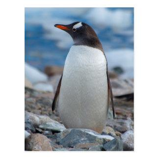 Postal La Antártida. Puerto de Neko. Pingüino de Gentoo
