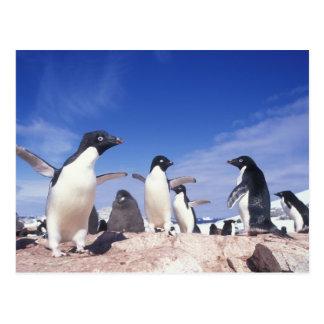 Postal La Antártida, Pygoscelis del pingüino de Adelie