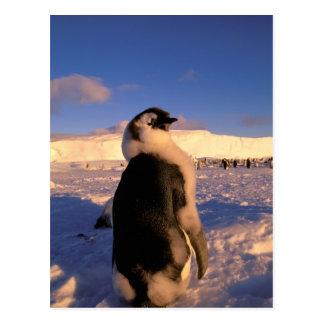 Postal La Antártida, territorio antártico australiano, 2