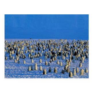 Postal La Antártida, territorio antártico australiano, 5