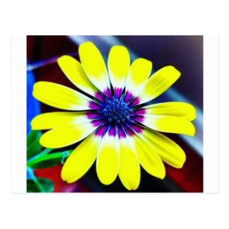 Postal La belleza de amarillo y de la púrpura