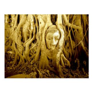 Postal La cabeza de Buda enredada en higo arraiga,