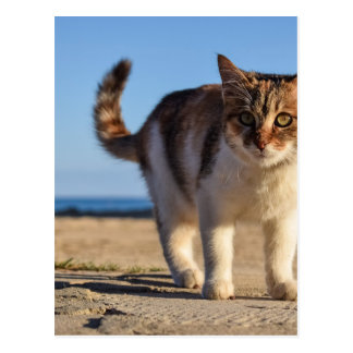 Postal La cara joven linda animal perdida del gato