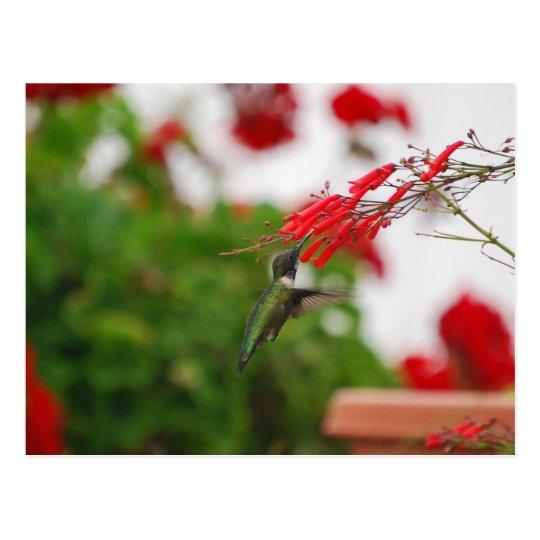 Postal La comida del colibrí