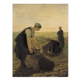 Postal La cosecha de la patata