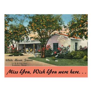 Postal La Florida, Bradenton, arboledas blancas de la