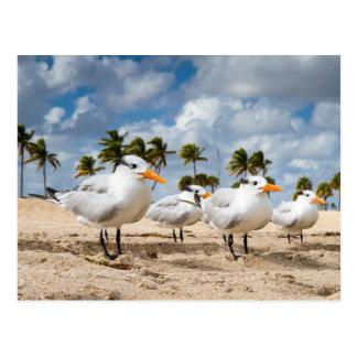 Postal La Florida - cuatro golondrinas de mar en una