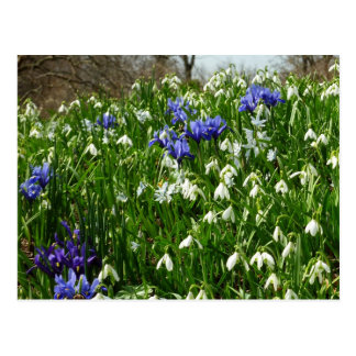 Postal La ladera de la primavera temprana florece paisaje