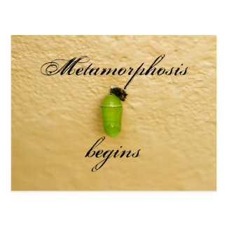 Postal La metamorfosis comienza verde de la mariposa de