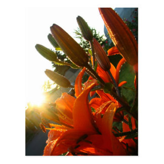 Postal La O.N.U del naranja floreció