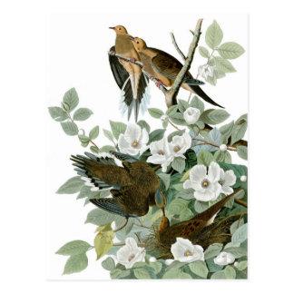 Postal La paloma de luto de Audubon