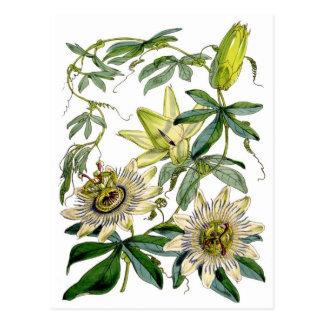 Postal La pasión florece el ejemplo botánico