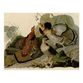 Postal La pintura de Audubon de un trío del urogallo