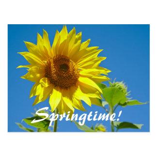Postal ¡La primavera está aquí! - Girasoles de la