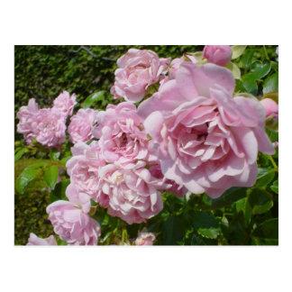 Postal La reina de los rosas de Suecia