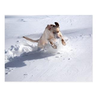Postal Labrador amarillo en la nieve