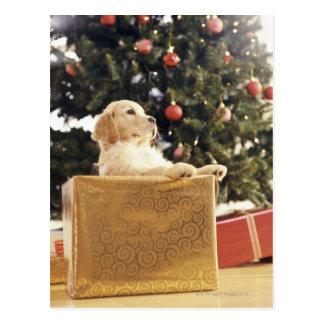 Postal Labrador joven que se inclina en un regalo de