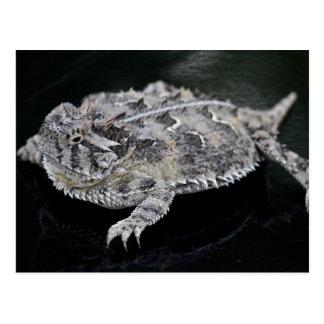 Postal Lagarto de cuernos de Tejas - reptil del estado de