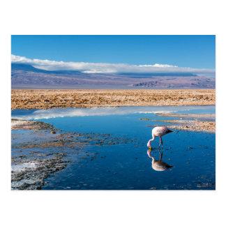 Postal, Lago en San Pedro de Atacama, Chile Postal