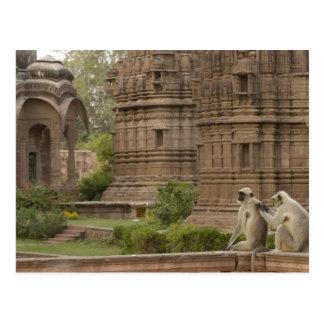 Postal Langurs de Hanuman o Negro-hecho frente, campo