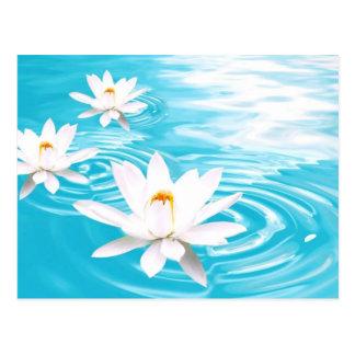 Postal Las plantas de Lotus blanco que flotan en la