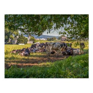 Postal Las vacas del PA de Lancanster