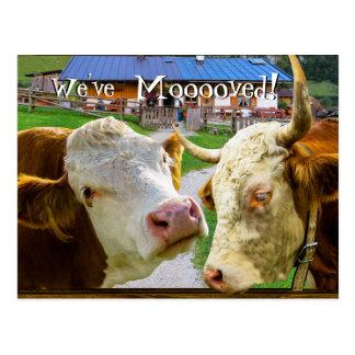 Postal Las vacas demasiado divertidas hemos movido la