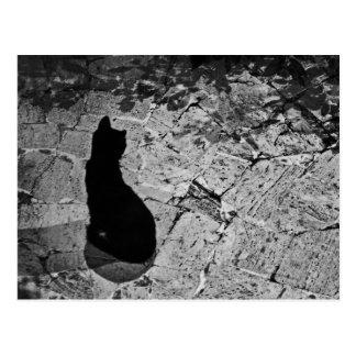Postal Le Chat Noir