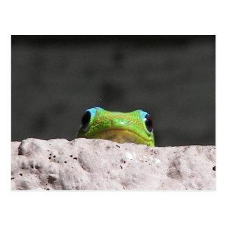 Postal Le veo gecko