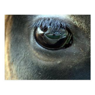 Postal Le veo, ojo de la vaca del jersey