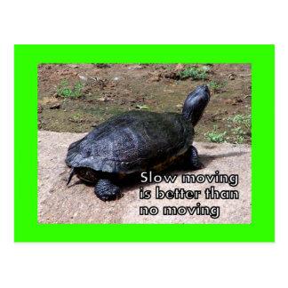 postal lenta de la tortuga