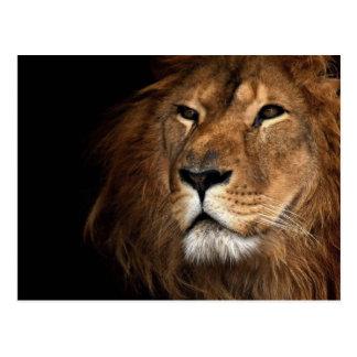 Postal león