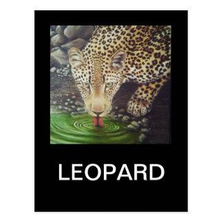 Postal Leopardo africano