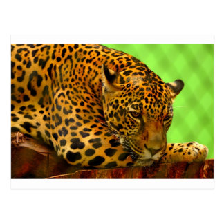 Postal Leopardo en el registro de Brown