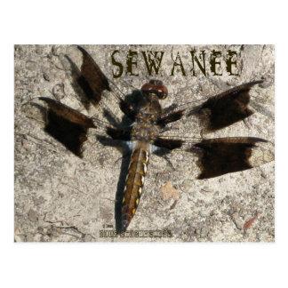 Postal Libélula de Sewanee - OlioStudios.com
