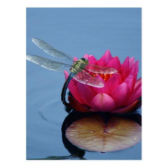 Postal Libélula en la flor de Lotus