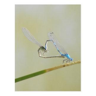 Postal libélulas en amor