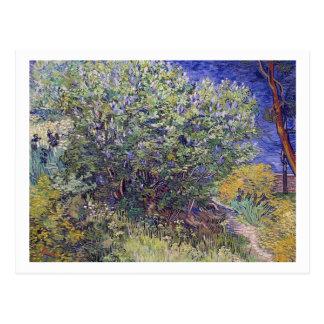 Postal Lila Bush de Vincent van Gogh