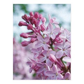 Postal Lilas púrpuras bonitas