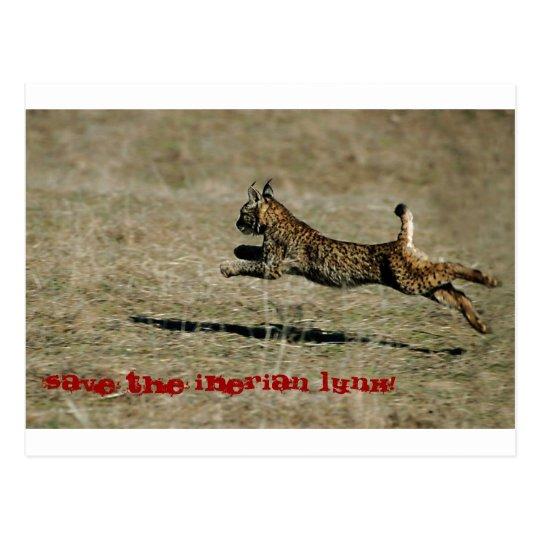 Postal LINCE IBÉRICO, Save the Iberian Lynx!